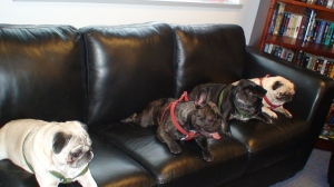 The dogs prefer to hang out in my office, a spoiler-free zone.