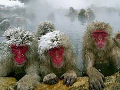 Hang on tight.  My Snow Monkeys are poised for a deep post-season run!