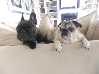 The original Lulu and Bubba!