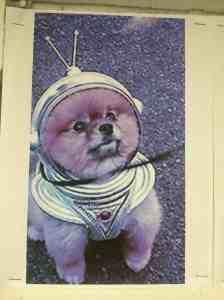 Episode 1: Space dog!