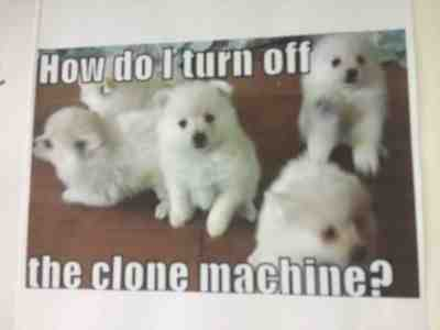 Episode 8: Clone dogs!